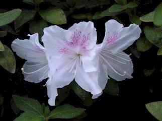 flowero1cy